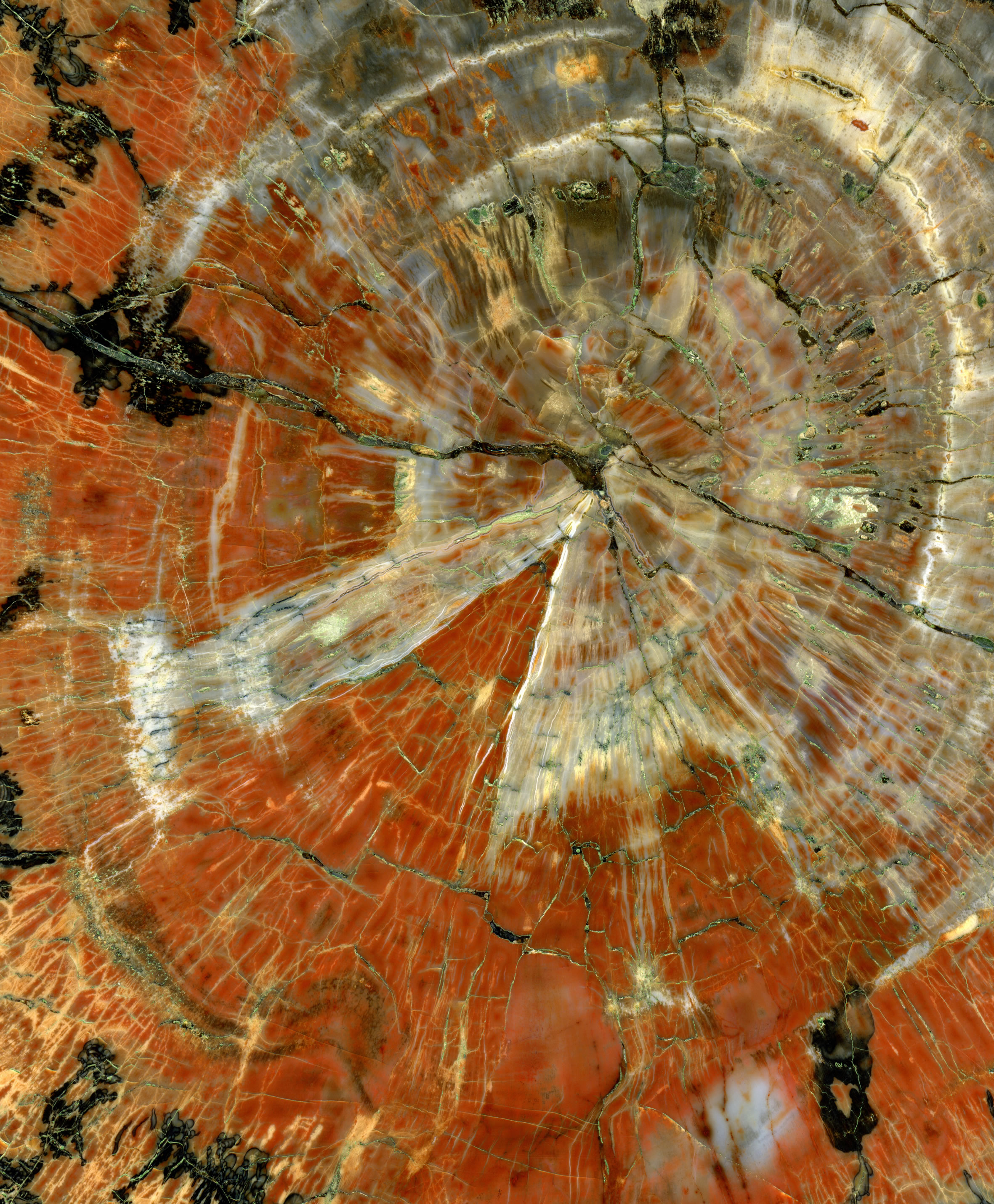 What is Petrified Wood? How Does it Form?
