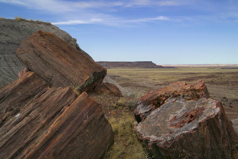 petrified wood - image by the National Park Service