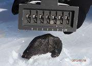 hunting meteorites in Antarctica