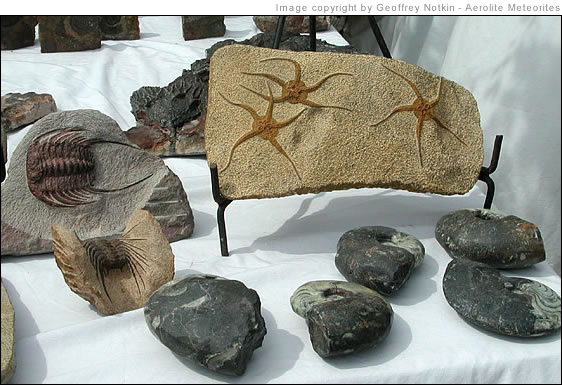 Moroccan fossils