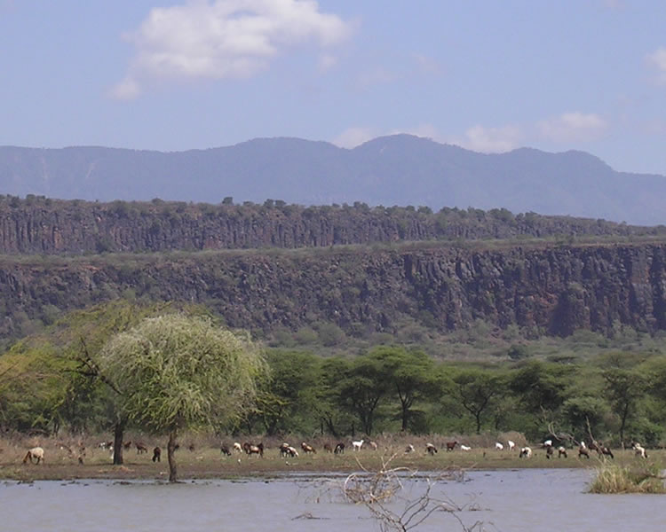 What is the rate of seperation of the African Rift Valley?
