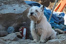 Duffy the Rockhound