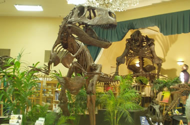 Black Hills fossils