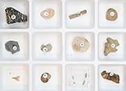 Fossil Kits