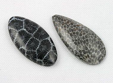 Coral fósil
