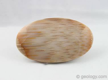 Petrified Palm