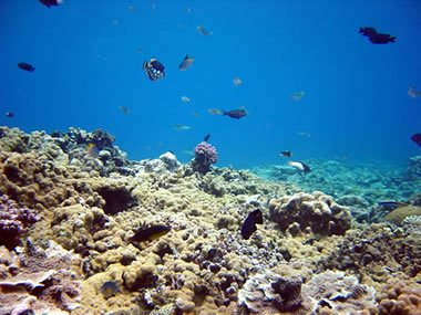 coral reef limestone forming environment