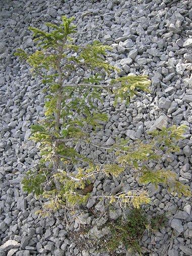 Quartzite: Metamorphic Rock - Pictures, Definition & More