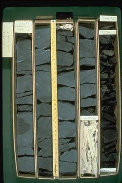 Shale core samples