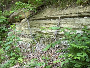 Siltstone outcrop