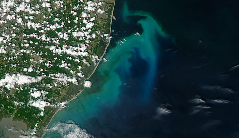 phytoplankton bloom off the coast of New Jersey