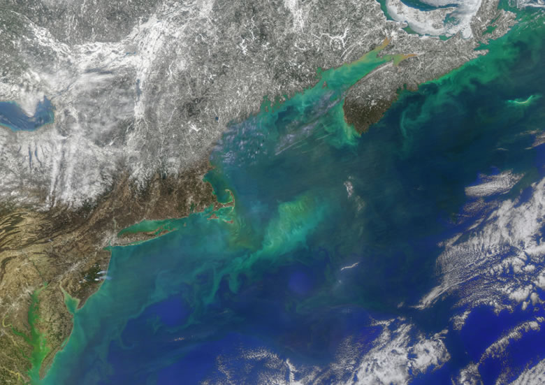 phytoplankton blooms off the cost of eastern North America