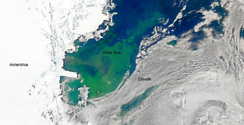 phytoplankton bloom in the Ross Sea, Antarctica