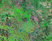Texas Satellite Image