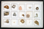 fossil collection kits