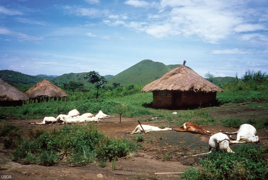 Lake Nyos, Cameroon, Gas Release August 21, 1986. Dead cattle and ...